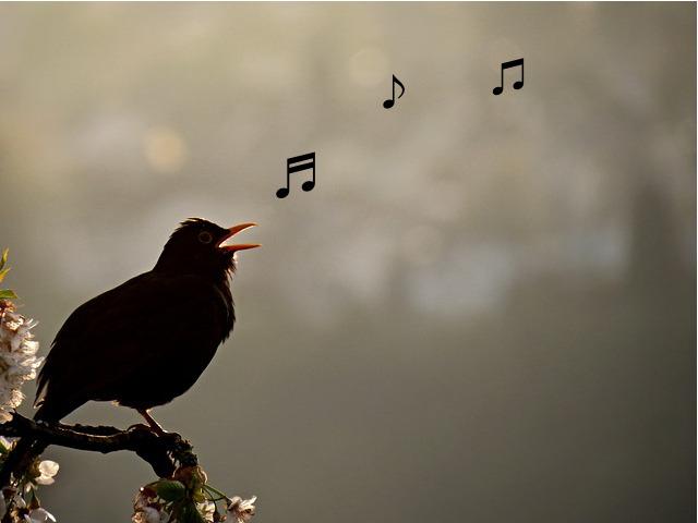 a black bird