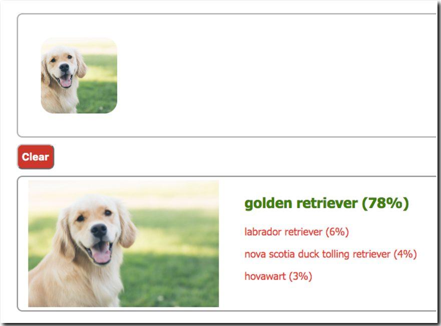 dog classification image